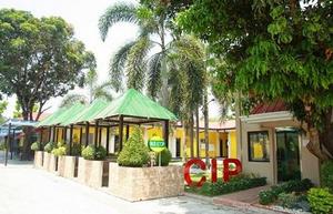 CIP 人气首选、最强外教学校
